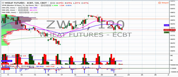 zc-weekly